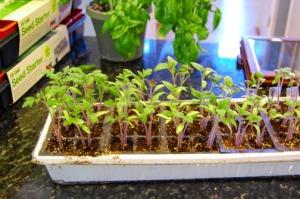 packedplants