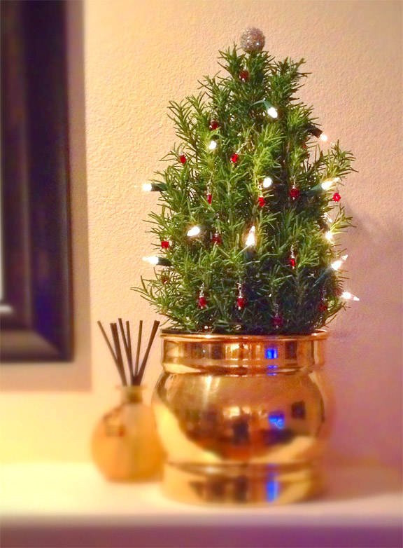 Christmas Rosemary Revives Old Holiday Custom