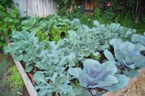 green veggie garden
